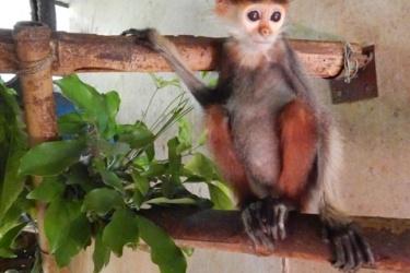 Người dân tự nguyện giao nộp động vật hoang dã quý hiếm để cứu hộ